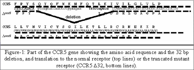 what is ccr5 delta 32 mutation